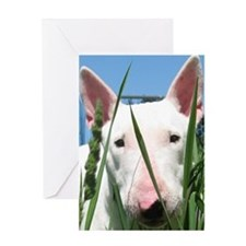 Cute English Bull Terrier Hiding in  Greeting Card