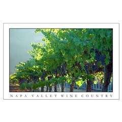 backlit vineyard, napa valley wine country posters