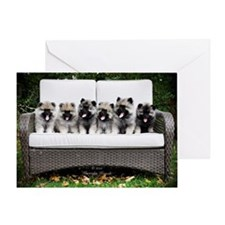 Keeshond Puppies in a Row Greeting Card