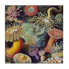 Vintage Sea Anemones Tile Coaster