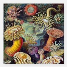 "Vintage Sea Anemones Square Car Magnet 3"" x 3"""