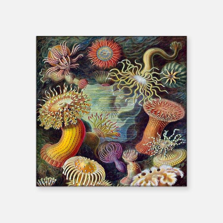 "Vintage Sea Anemones Square Sticker 3"" x 3"""