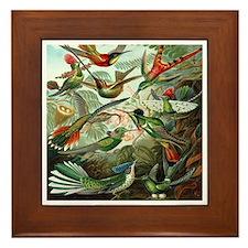 Vintage Hummingbirds Framed Tile