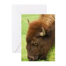 Bison Grazing Greeting Cards (Pk of 10)