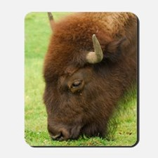 Bison Grazing Mousepad