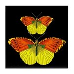 TWO BUTTERFLIES Tile Coaster