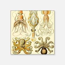 "Vintage Octopus, Octopi Square Sticker 3"" x 3"""