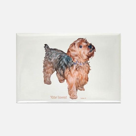 Silky Terrier Mister Innocent Rectangle Magnet (10