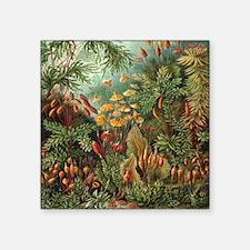 "Vintage Moss, Muscinae Square Sticker 3"" x 3"""