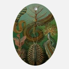 Vintage Segmented Worms, Chaetopoda Oval Ornament