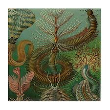 Vintage Segmented Worms, Chaetopoda Tile Coaster