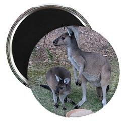 """Kangaroos 2.25"""" Magnet (10 pack)"""