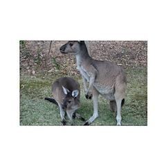 Kangaroos Rectangle Magnet (10 pack)