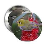 Silvereye Button