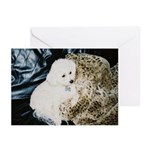 LEOPARD BLANKIE GREETING CARDS (Pk of 10)