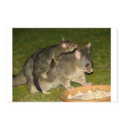 Possum mother & baby Postcards (Package of 8)
