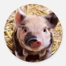 sweet piglet Round Car Magnet