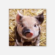 sweet piglet Sticker