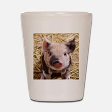 sweet piglet Shot Glass