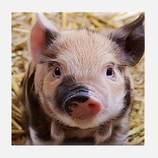 sweet piglet Tile Coaster