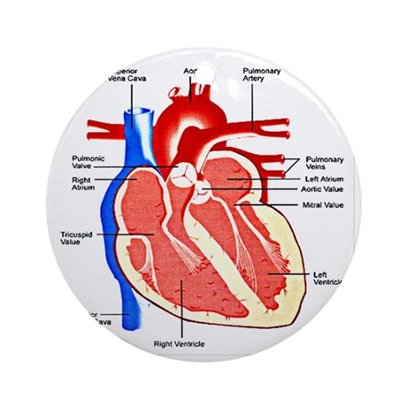 Heart Diagram Round Ornament by listing-store-112282429