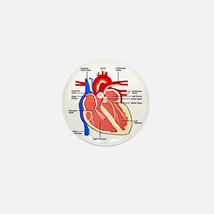 Heart Diagram Mini Button
