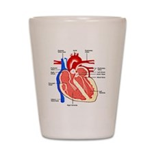 Heart Diagram Shot Glass