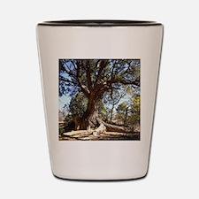 Twisted Tree Shot Glass