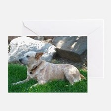 Red Heeler Relaxing on a Spring Day Greeting Card