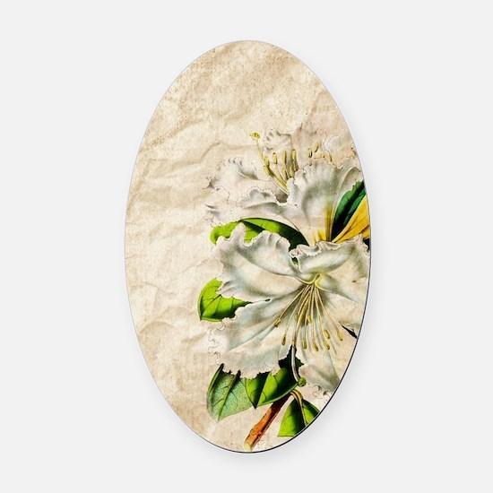vintage lily botanical art Oval Car Magnet
