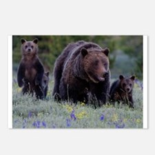 MAMMA GRIZZLY and 3 CUBS Postcards (Package of 8)