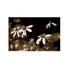 Black and White Photo of Flowers Rectangle Magnet