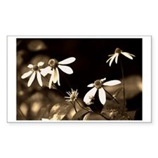 Black and White Photo of Flowe Decal