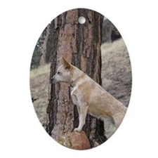 Red Heeler Ready Ornament (Oval)