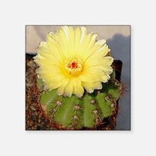 """Cactus004 Square Sticker 3"""" x 3"""""""