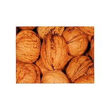 walnuts 5'x7'Area Rug