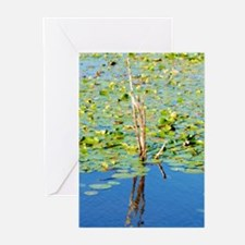 Water Lillies Greeting Cards (Pk of 10)
