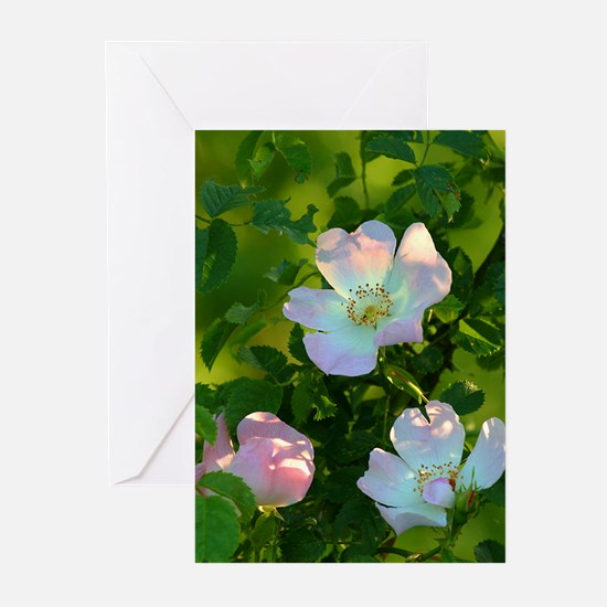 Roses Greeting Cards (Pk of 10)