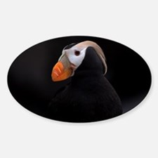 Puffin Tufted 8931 Decal