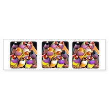 Gouldian Finch Bumper Bumper Sticker