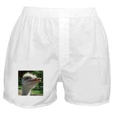 bird ostrich, Boxer Shorts