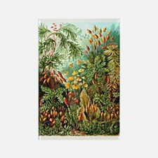Ernst Haeckel: Muscinae, Botanica Rectangle Magnet