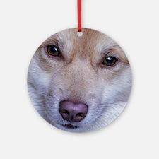 IcelandicSheepdog001 Round Ornament