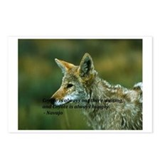 The Coyote is watching Postcards (Package of 8)