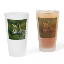 The Coyote is watching Drinking Glass