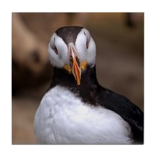 Puffin Horned 9020 Tile Coaster
