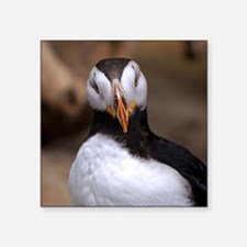 """Puffin Horned 9020 Square Sticker 3"""" x 3"""""""