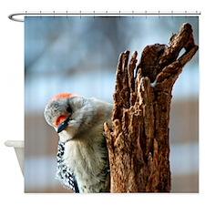 Cute Feed birds Shower Curtain