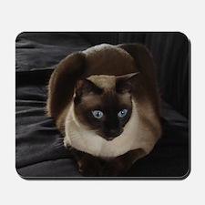 Lulú, the Siamese Cat Mousepad