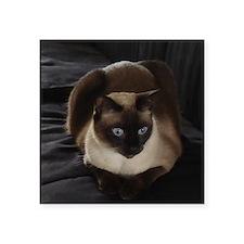 """Lulú, the Siamese Cat Square Sticker 3"""" x 3"""""""